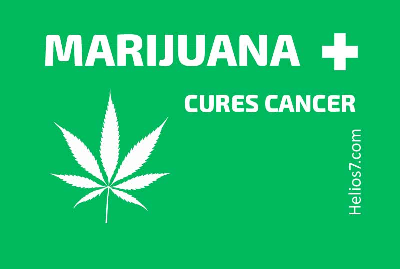 marijuana cancer cure
