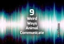 weird animal communication