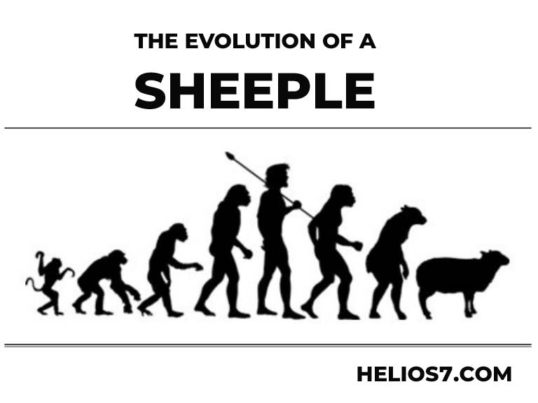 evolution of a sheeple